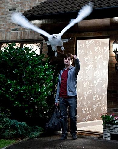 Harry sends off Hedwig